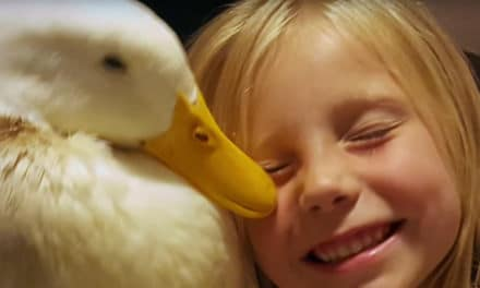 Duck pals: A girl and her duck