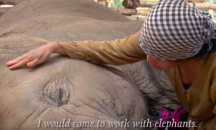 How This Business is Saving Elephant Lives – Elephant Nature Park
