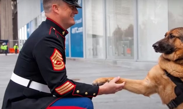 Soldiers return Home To meet their Dogs for the first time