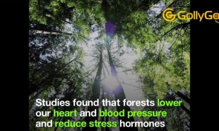 """""""Forest Bathing"""" – This Is The Power Of A Walk Among The Trees"""