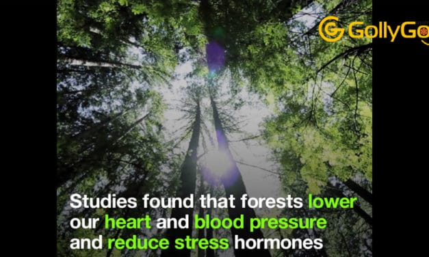 """Forest Bathing"" – This Is The Power Of A Walk Among The Trees"