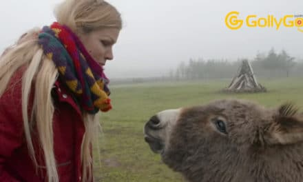 Donkey and Woman Who Both Lost Children Celebrate Their Emotional Journey