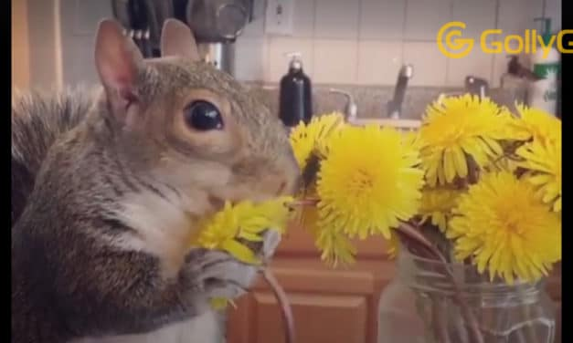 Rescue Squirrel Always Helps Her Mom Unpack Groceries and Loves Avocados – Thumbelina